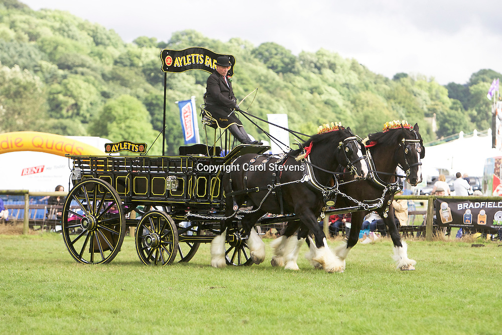 Glenn Cass driving his own black Shires<br /> 5th  Pairs Turnouts
