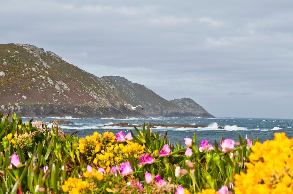 Spanien,Galizien, Provinz A Coruna, Kueste westlich von Malpica de  Bergatinos , Am Strand Praia de Parizo - Barizo Porto