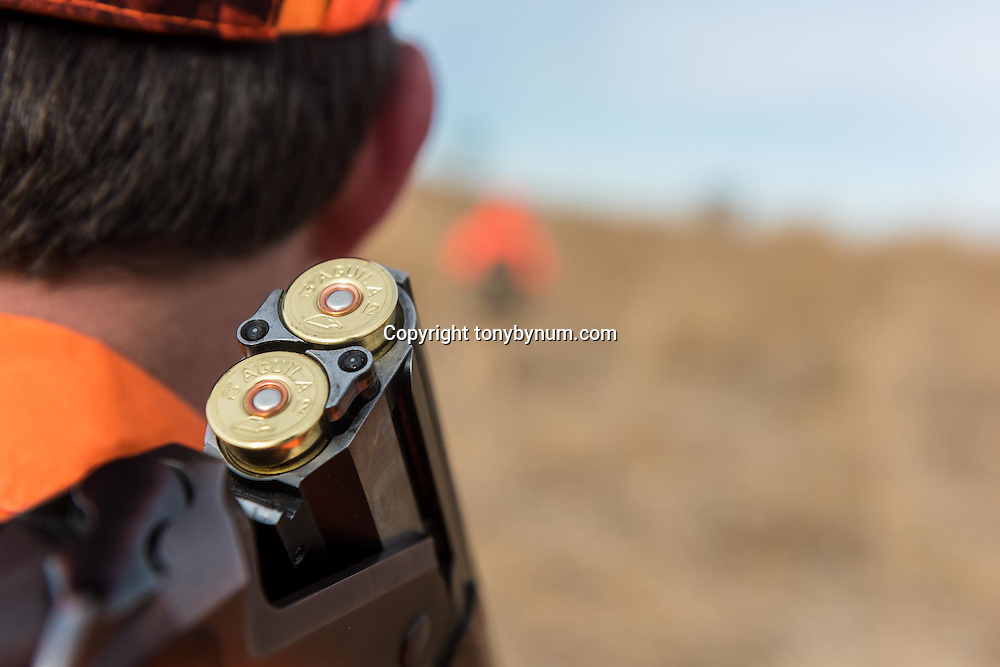 pheasant hunting grasslands, upland game bird hunting aguila