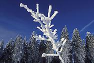 DEU, Germany, Sauerland region, snow-covered forest near the town Winterberg.....DEU, Germany, Sauerland, verschneiter Wald nahe Winterberg.........