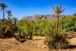 An oasis near Zagora in southern Morocco<br /> <br /> (c) Andrew Wilson | Edinburgh Elite media