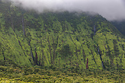Koolau Forest Reserve, Hana Coast, Maui, Hawaii