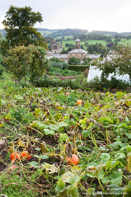 The pumpkin bed in the kitchen garden at Chatsworth House, Derbyshire