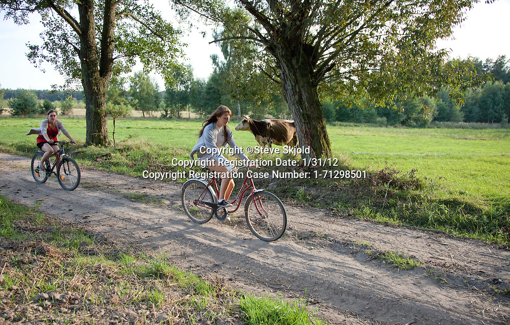 Polish teen female bicyclers traveling along dirt road passing a cow in a farmer's field. Zawady Central Poland