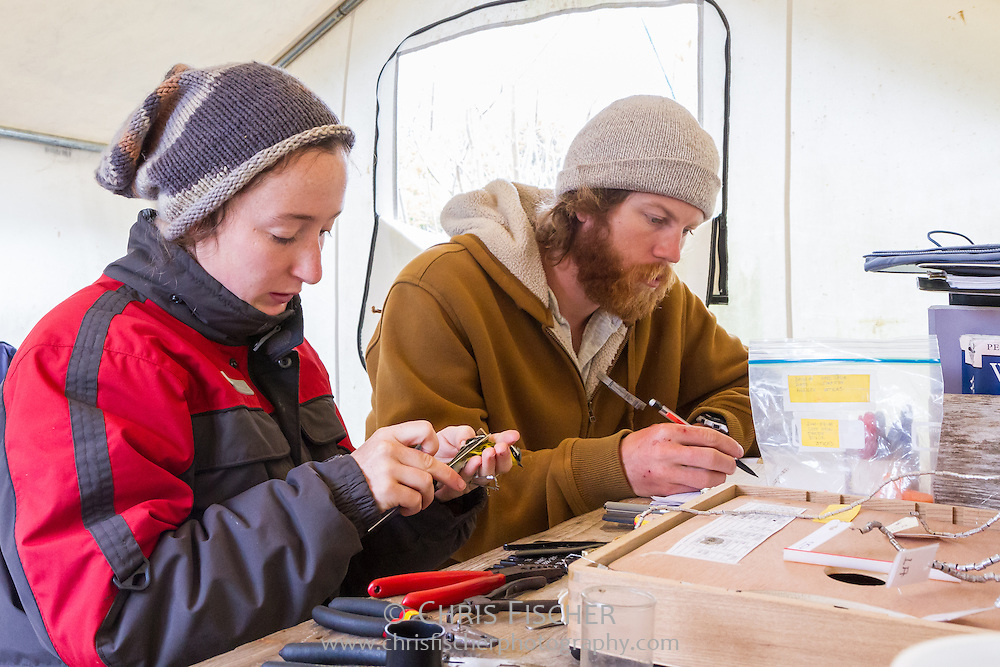 Field researchers Emily Pollom and John Gorey record measurements being taken on a Magnolia Warbler as part of a bird banding operation on Stratton Island, Maine. This data is submitted to the Bird Banding Lab for inclusion in a central database that documents movements, longevity, and sources of mortality for North American birds.