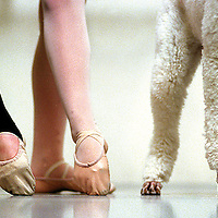 Arielle Poodelle, a standard poodle, takes her place with members of Santa Cruz Ballet Theater during her audition for the part of the manor hound in the company's production of 'Giselle'.