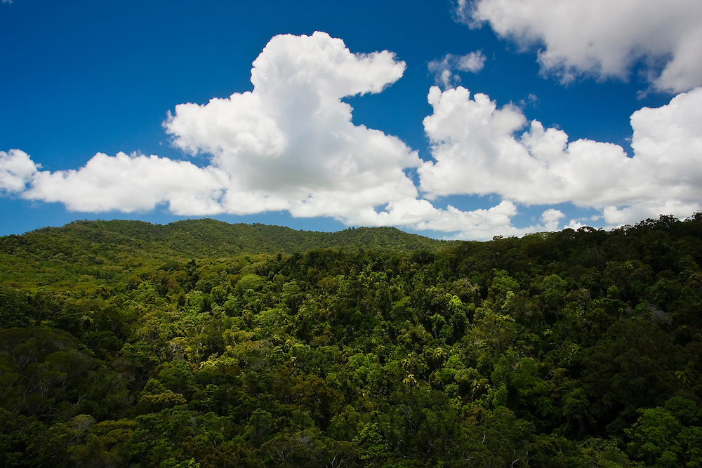 Barron Gorge National Park Rainforest from the Skyrail Cableway, North Queensland, Australia