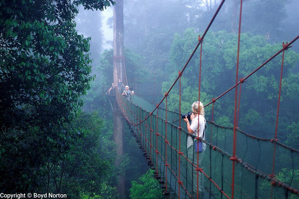 Forest canopy walkway, Danum Valley Rainforest Preserve, Borneo, Malaysia.
