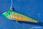 fishing lure aboard Reel Addiction, Vava'u, Kingdom of Tonga, South Pacific