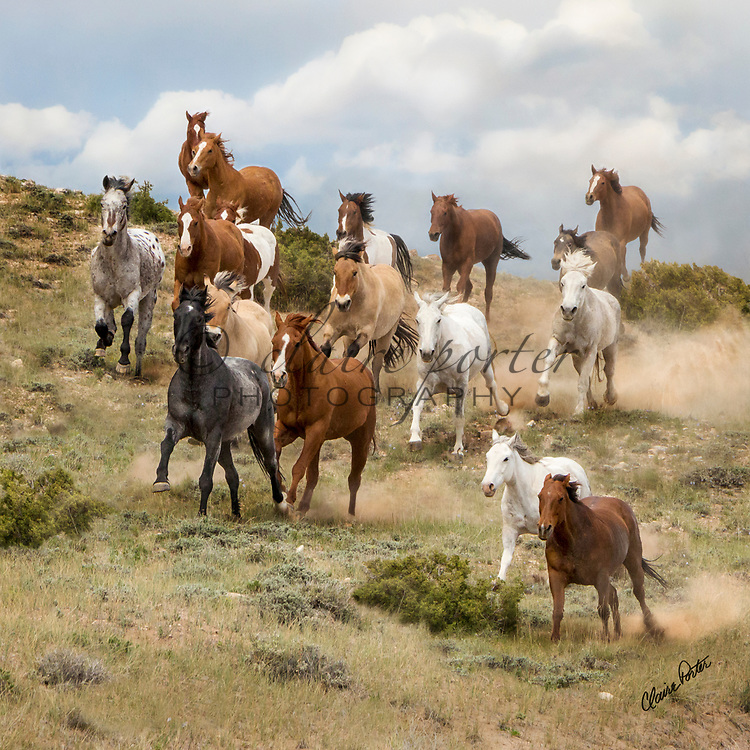 These gorgeous images come from the Annual Sombrero Horse Drive outside of Craig, Colorado. This is a once in a lifetime opportunity and experience for the horses, riders, cowboys and the photographers. I hope you enjoy viewing them. <br />