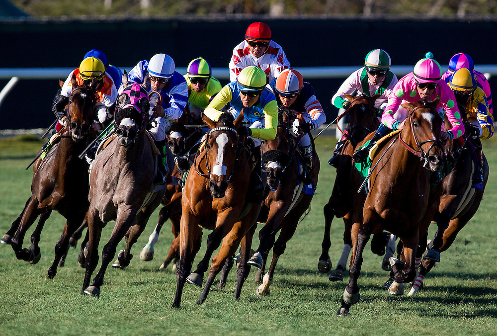 November 28, 2015:  Family Meeting with Drayden Van Dyke up wins the Jimmy Durante Stakes at Del Mar Race Track in Del Mar, California. Evers/ESW/CSM