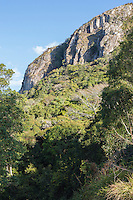 Thick forest patch growing in the Bvumba, Seldomseen, Bvumba, Manucaland Province, Zimbabwe