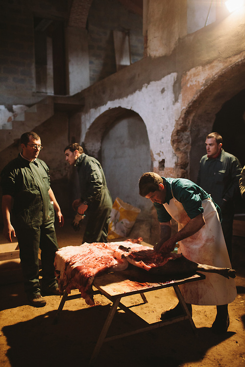 Antonio Blás, Matarife (slaughterman), butchering the Iberico pig. Finca Al Cornocal, Extramadura (Barajoz Province), Spain.