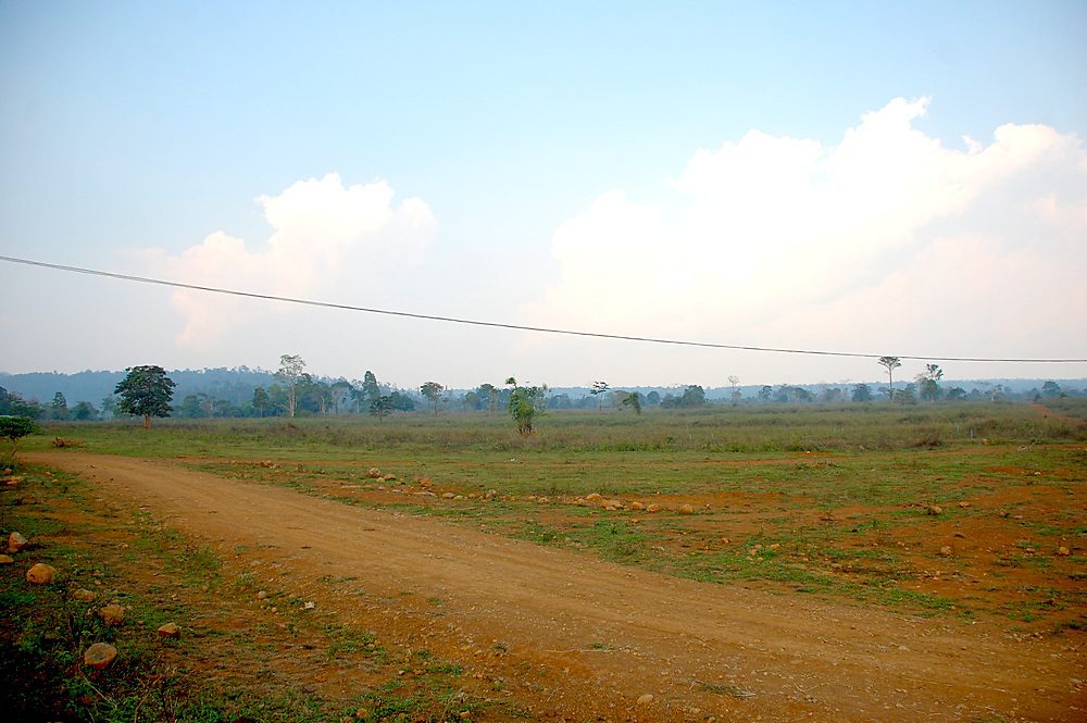 Coffee plantation in Pakse