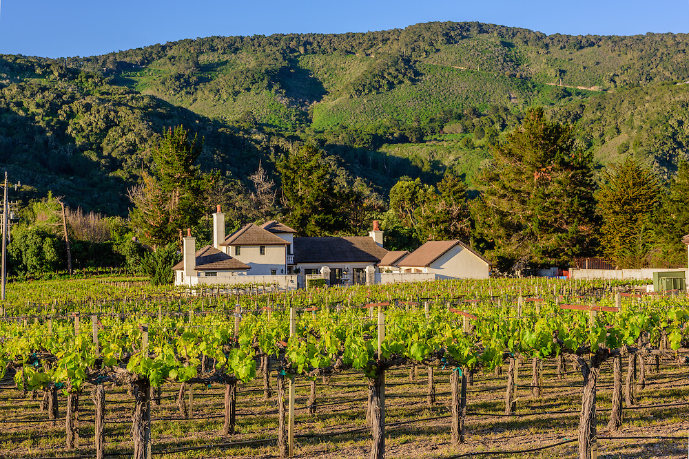 Chateau Julien Wine Estate, Vineyard, Carmel Valley, California