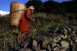 POKHARA, NEPAL - OCTOBER 1992 - A Nepalese woman harvests a crop in the foothills of the Annapurna mountain range, near Pokhara, Nepal.<br />