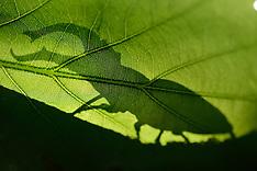 Wildlife on Oak | Wildnis Eiche