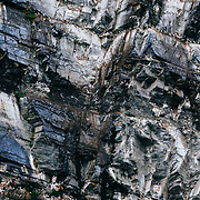 A colony of black-legged kittiwake (Rissa tridactyla) nesting on cliffs near Lake Clark National Park, south-central Alaska.