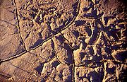 THIS PHOTO IS AVAILABLE FOR WEB DOWNLOAD ONLY. PLEASE CONTACT US FOR A LARGER PHOTO. Idaho. Cracked earth forms graphic patterns in the desert.
