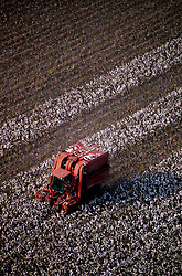 Stock photo of a large man driven machine harvesting cotton