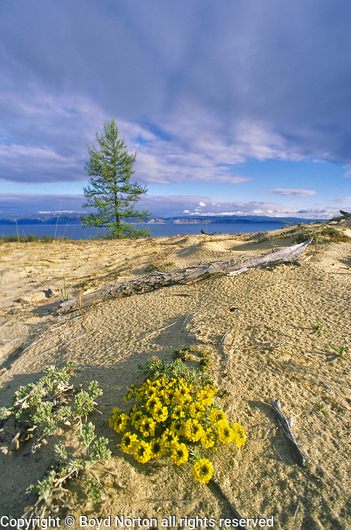 Sand dunes, Pribaikalski National Park, Olkhon Island, Lake Baikal. Olkhon Islands is the largest island in the lake. Lake Baikal is the oldest (25 million years), deepest (5700 feet) and largest lake in the world by volume(it holds 20% of the earth's liquid fresh water). Threatened by pollution and most recently by an oil pipeline, Baikal has become a rallying point for Russian and international conservationists. Baikal was declared a World Heritage Site in 1996. Boyd Norton, the photographer here, worked with Russian and U.S. environmentalists to get Baikal designated a World Heritage Site.