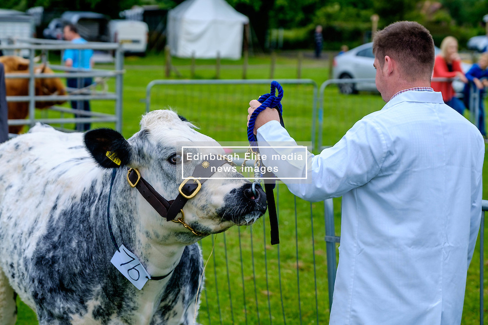 Biggar, South Lanarkshire, Scotland 23 July 2016<br /> <br /> Showing cattle.<br /> (c) Andrew Wilson | Edinburgh Elite media