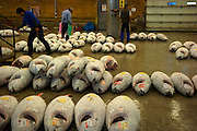 The Tsukiji wholesale fish market of Tokyo has huge warehouses, several of which are taken up by catches of massive Tuna fish.