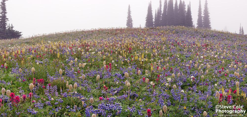 Mazama Meadow - Mount Rainier National Park