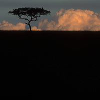 Africa, Kenya, Masai Mara Game Reserve, Lone acacia tree in silhouette against distant storm clouds at sunsetAfrica, Kenya, Masai Mara Game Reserve, Lone acacia tree in silhouette against distant storm clouds at sunset