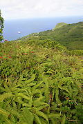 Pitcairn Island from top of island.<br />