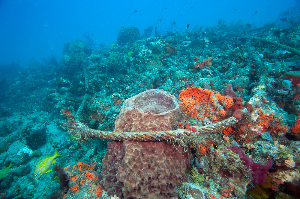 A discarded anchor line damages delicate sponges and corals on the Breakers Reef in Palm Beach County, Florida, United States.