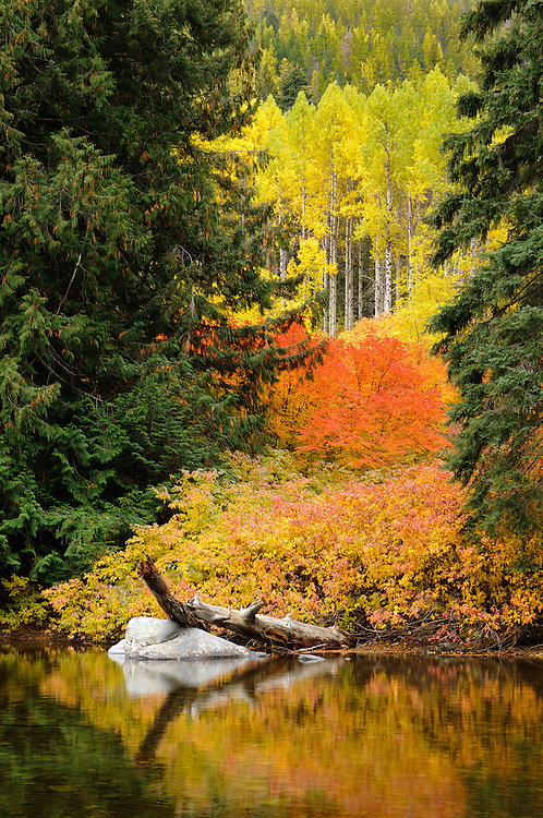 Fall color in Icicle Creek Canyon, Wenatchee National Forest, near Leavenworth, Washington.