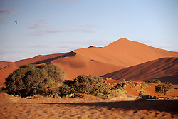 NAMIBIA SOSSUSVLEI 21APR14 - General view of trees and  sand dunes in the Sossusvlei in the Namib Desert, Namibia.<br /> <br /> Sossusvlei is a salt and clay pan surrounded by high red dunes, located in the southern part of the Namib Desert, in the Namib-Naukluft National Park, which is one of the major visitor attractions of Namibia.<br /> <br /> jre/Photo by Jiri Rezac<br /> <br /> © Jiri Rezac 2014