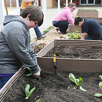 Lauren Wood | Buy at photos.djournal.com<br /> Student Dave Cole plants lettuce in the raised beds Wednesday afternoon in the courtyard at Pontotoc Middle School as part of the agriculture elective class.