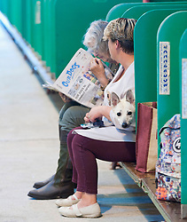 © Licensed to London News Pictures. 18/08/2018. Llanelwedd, Powys, UK. Contestants relax on the benches on the second day of The Welsh Kennel Club Dog Show, held at the Royal Welsh Showground, Llanelwedd in Powys, Wales, UK. Photo credit: Graham M. Lawrence/LNP