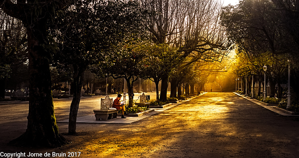 Golden light filters through the trees of a lane of trees in a park in the center of Santiago de Compestela.