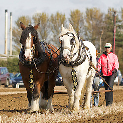 Northern Heavy Horse Society Annual Ploughing Match 2014