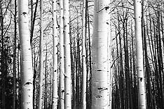 Kebler Pass (Hwy 12) Aspen Photos - Stock images, pictures, Southwest Colorado