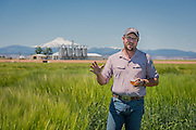 Seth Klann gives a tour through a field of Full Pint Barley at his family farm, Mecca Grade Estate Malt, in Madras, Oregon.