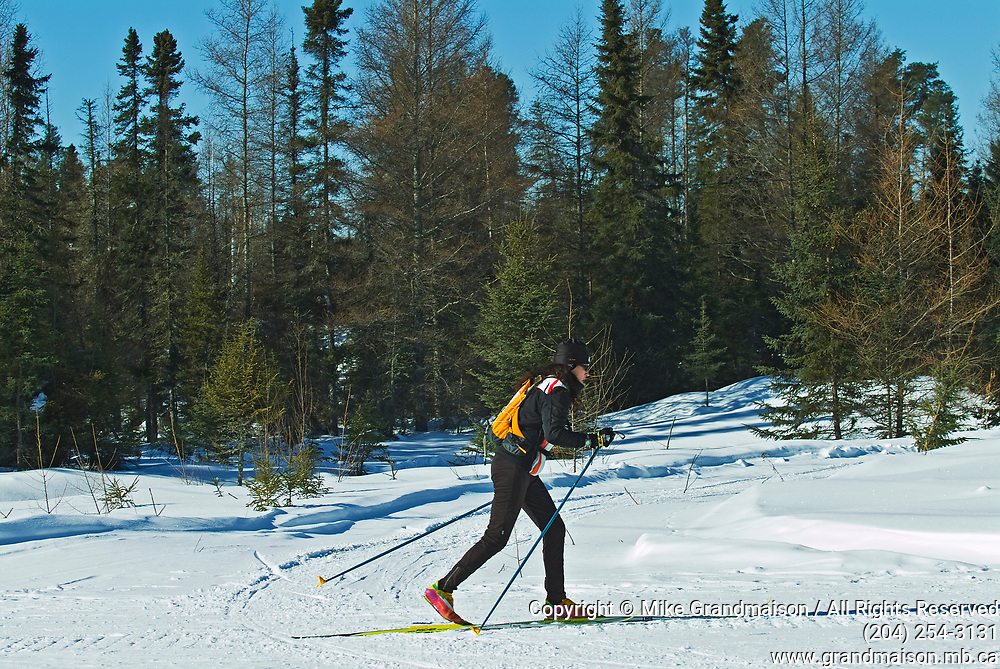 Cross country skiiing in boreal forest <br />