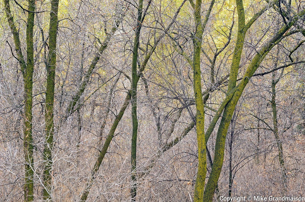 Late autumn foliage along the Seine River<br />
