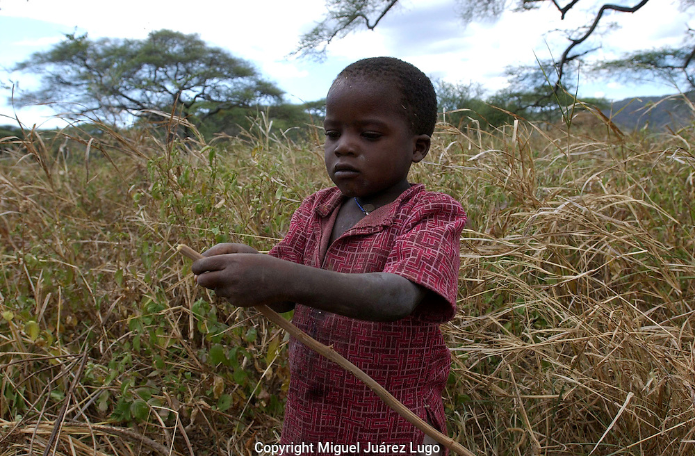 Yaeda Valley, Tanzania: A Hadzabe boy cleans off a stick that will become an arrow in a practice that has changed little for 60,000 to 90,000 years. Hadzabe boys learn to hunt with tiny arrows, starting out aiming for lizzards and birds. The tribe of hunter gatherers is on the verge of vanishing into the modern world, with only 1500 still practicing the traditional ways in this corner of northern Tanzania. (PHOTO: MIGUEL JUAREZ)