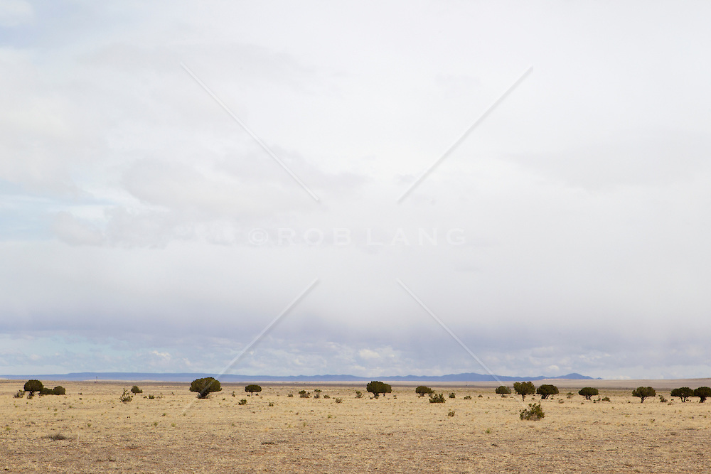 peaceful landscape in New Mexico