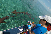Cecilia Guerrero monitoring<br /> Nurse Shark (Ginglymostoma cirratum)<br /> Shark Ray Alley<br /> Hol Chan Marine Reserve<br /> near Ambergris Caye and Caye Caulker<br /> Belize<br /> Central America