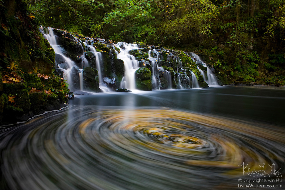 Fallen leaves seem to be trapped in a vortex beneath Upper Beaver Creek Falls in Oregon. The splash pool beneath the waterfall is blocked by a beaver dam, causing the water to circle before it's able to spill over the dam.