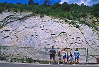 Dinosaur tracks in Dakota sandstone at the Alameda Tracksite on Dinosaur Ridge near Morrison, CO.