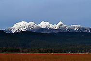 "The ""Golden Ears"" mountains of the Coast Range from a blueberry field in Pitt Meadows, British Columbia, Canada"