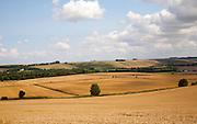 Summer landscape of golden rolling arable fields view west from near Liddington castle, Wiltshire, England