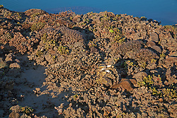 A diversity of corals and other marine life including clams on Turtle Reef on the Kimberley coast.