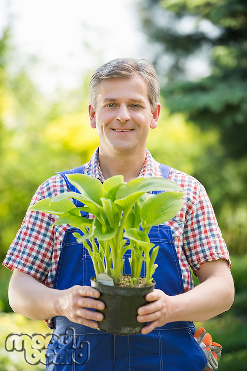 Portrait of happy gardener holding potted plant at nursery